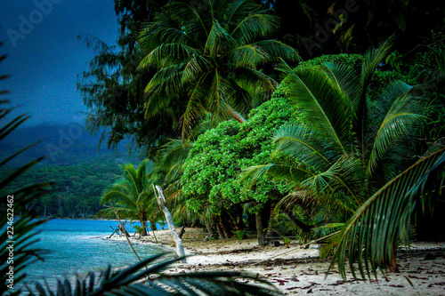Obraz na płótnie View of a jungle beach on Pele Island, a tiny tropical island with deserted beac