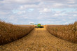 canvas print picture - Green combine in corn field during harvest
