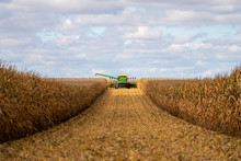 Green Combine In Corn Field During Harvest