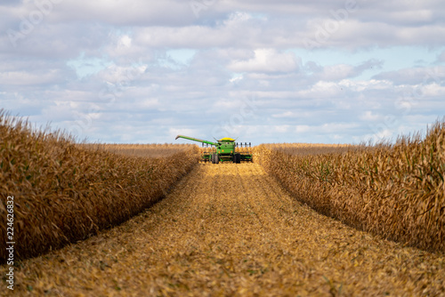 Fotografia Green combine in corn field during harvest