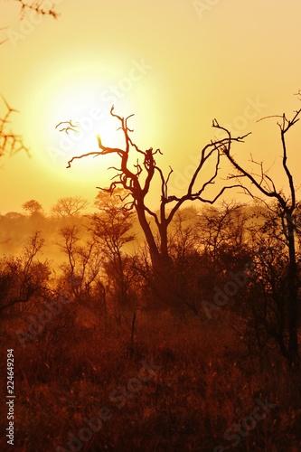 Spoed Foto op Canvas Bruin Sunrise in Africa