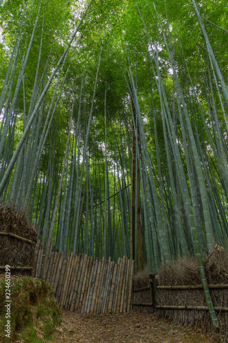 In de dag Bamboo Bamboo Forest Japan