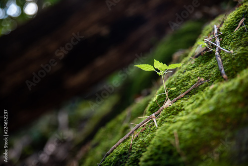 фотография  Plant growing on the rock in forest.