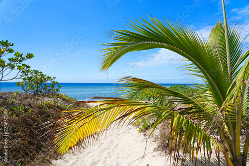 Foto op Plexiglas Palm boom Palm tree on a white sandy beach