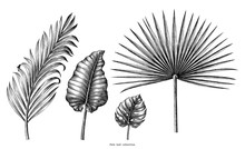 Palm Leaf Collection Vintage Engraving Illustration Clip Art Isolated On White Background