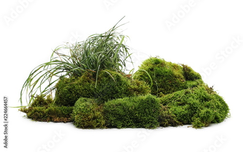 Obraz Green moss with grass isolated on white background - fototapety do salonu