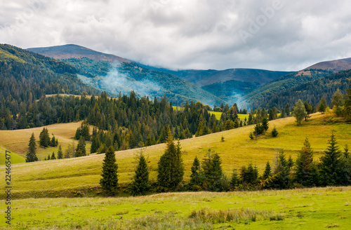 overcast autumn day in mountains. grassy rolling hills with spruce trees. beautiful countryside landscape