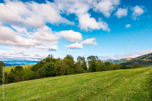 early autumn countryside in mountains. row of trees behind the grassy meadow. fluffy clouds on a blue sky