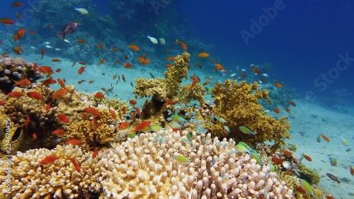 Poster Koraalriffen Beautiful coral reef, colorful underwater scenery