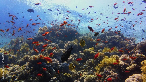 Tuinposter Koraalriffen Beautiful coral reef, colorful underwater scenery