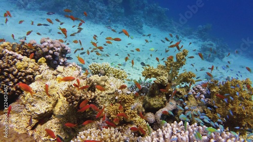 Papiers peints Recifs coralliens Beautiful coral reef, colorful underwater scenery