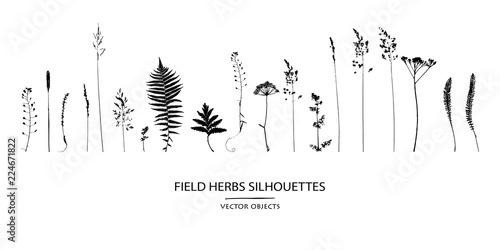 Foto  Vector silhouettes collection. Set of field flowers, herbs.