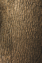 Close Up Of Textured Brown Bark Of Tree