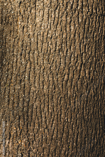 Close up of textured brown bark of tree Wallpaper Mural