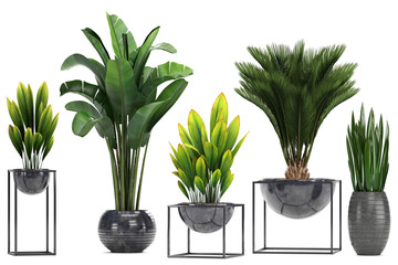 collection Exotic plants