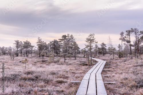 Fotografie, Obraz  Frosty morning in raised bog