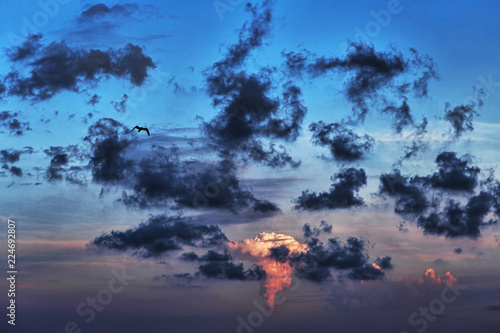 A bird flies in the cloudy sky among dark clouds - selective focus
