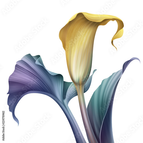 Fotografie, Obraz abstract tropical flower, botanical illustration, decorative calla lily, clip ar