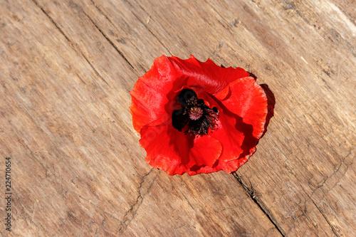Fotobehang Klaprozen Red poppy flower on wooden background