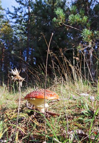 Photo Dancing mushroom