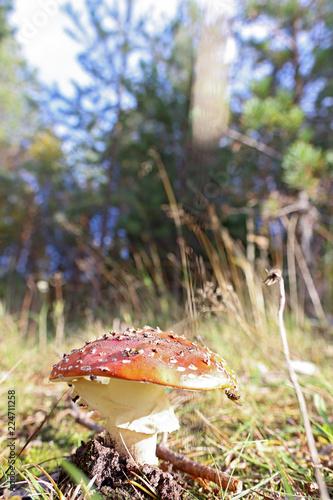 Canvas Print Dancing mushroom