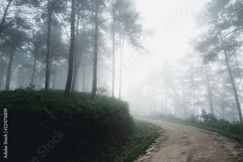 Foto op Aluminium Begraafplaats Fog and trees forest in the morning