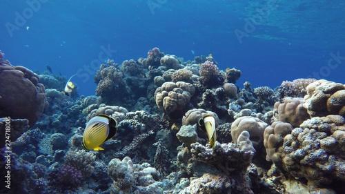 Staande foto Koraalriffen Colorful corals and fish. Tropical fish. Underwater life in the ocean.