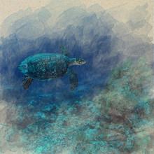 Sea Turtle Cora Reef Sea Marin...
