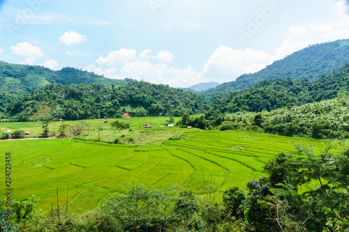 Foto  Rice fields in the mountain valley. Laos.