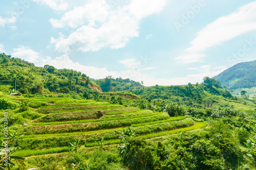Fotografia  Rice fields in the mountain valley. Laos.