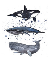 Vector Illustration. Whales Se...