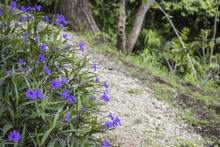 Dirt Trail Lined With Purple Flowers By The Laguna De Apoyo Lake In Nicaragua