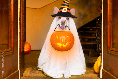 Poster Crazy dog halloween ghost dog trick or treat