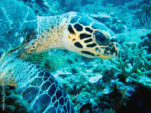 Close up photo of a sea turtle. The photo is in yellow and blue colors. the part of fin is appeared.