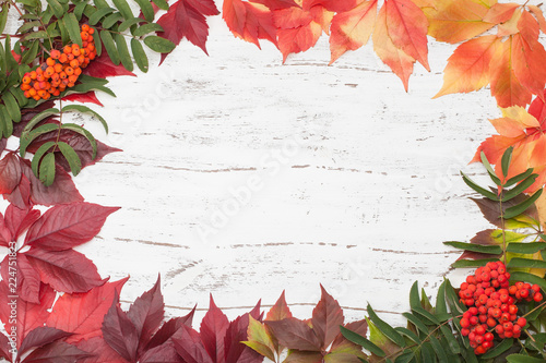 Foto op Canvas Bloemen leaf, leaves, autumn, season, background, Apple, pumpkin, Rowan, berry, pepper, food, vegetarian, red, yellow, green, Board, white, beautiful, postcard, Board