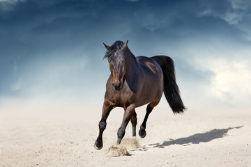 Fototapeta Stallion in motion in desert dust against beautiful sky
