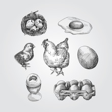 Hand Drawn Eggs Sketches Set. ...