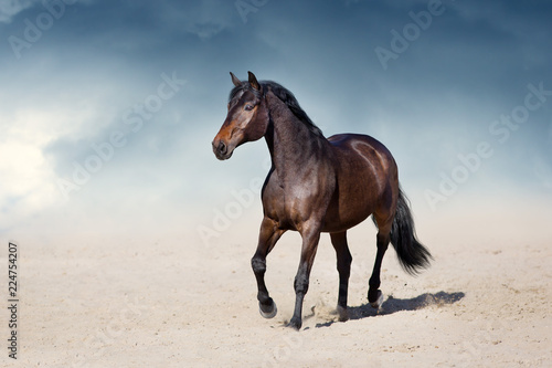 Photo sur Toile Chevaux Stallion in motion in desert dust against beautiful sky