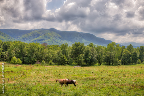 Fotografie, Tablou  Landscape photo of two horses in a green meadow in the Great Smoky Mountains wit