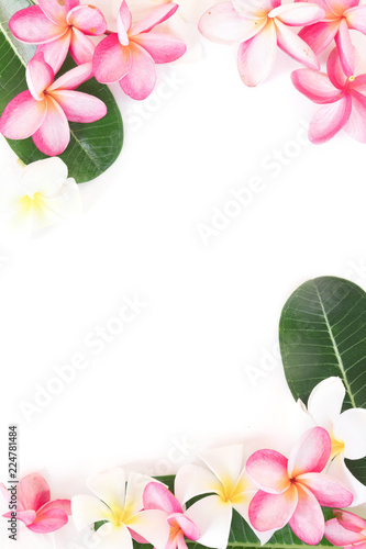 Tuinposter Frangipani Tropical floral modern border from palm leaves and frangipani plumeria flower
