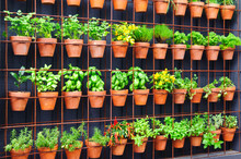 Vertical Herb Garden In Indivi...