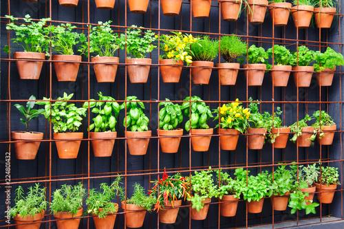 Fototapeta Vertical herb garden in individual terracotta pots obraz