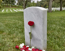 A Blank Headstone With A Rose ...
