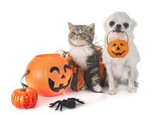 Puppy, Kitten And Hallowen