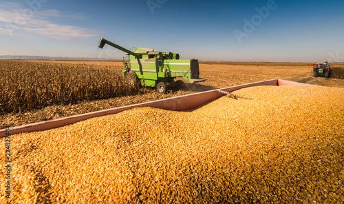 Fototapeta Harvesting of corn field with combine obraz