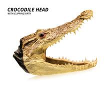 Crocodile Head Isolated On Whi...