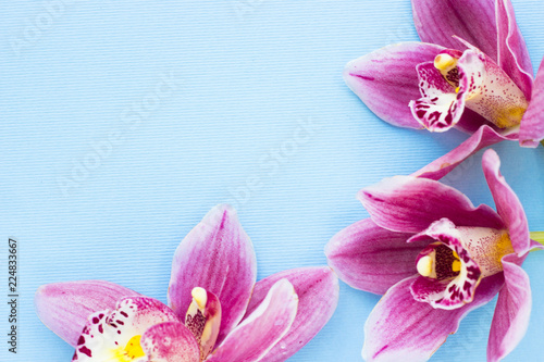 Foto op Plexiglas Magnolia Spa and wellness setting with orchid flower, oil on wooden blue background closeup top view