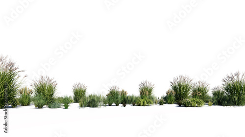 3d rendering of a group of plants raw for architectrural background use isolated Fototapete