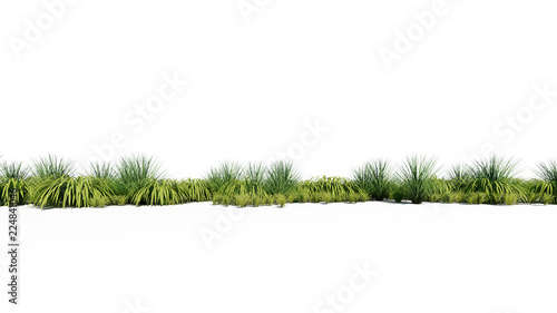 Photo 3d rendering of a group of plants raw for architectrural background use isolated
