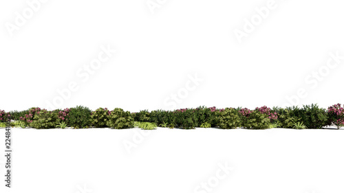 3d rendering of a group of plants raw for architectrural background use isolated Fototapet